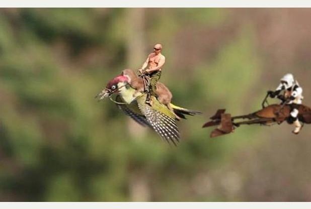 Nejznámější příklad hypertellingu aneb vzácná fotka lasičky jedoucí na datlovi od National Geographic potuněná tvořivým publikem